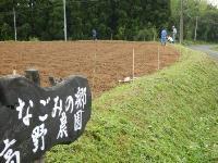 大豆の種まき2