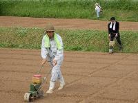 大豆種まき